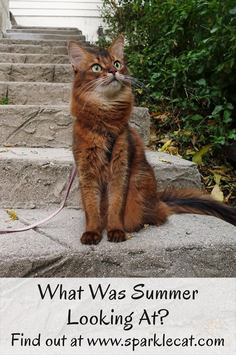 What is Summer looking at? The answer is in today's blog post.