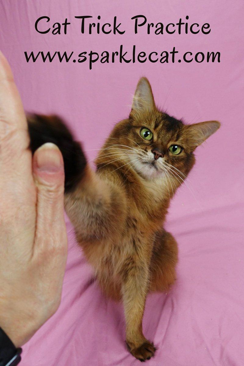 Cat Trick Practice Session