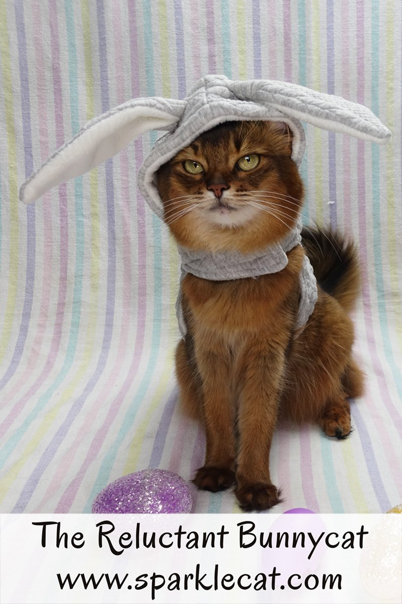 Summer is not sure if she wants to be a bunnycat for Easter.