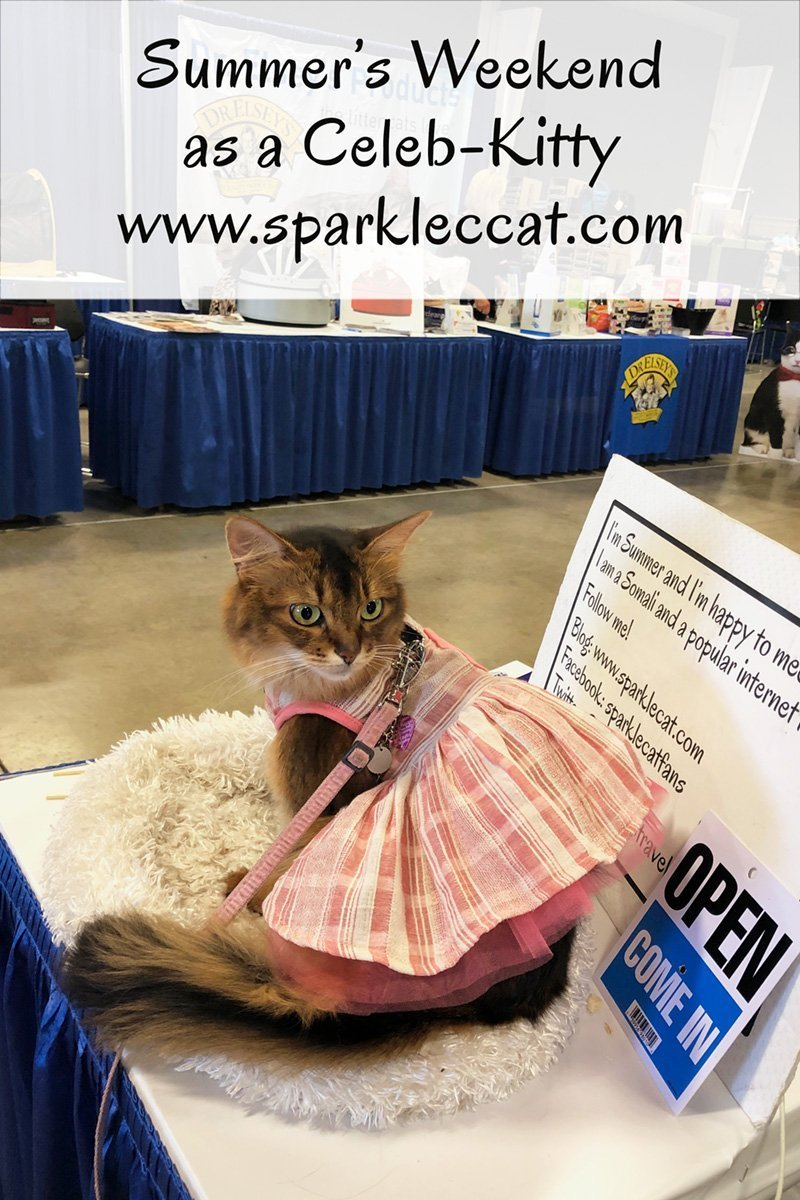 Summer has an amazing weekend at the Pet Expo as a celeb-kitty.