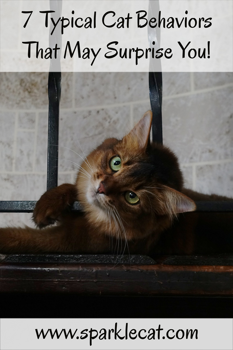 Seven Typical Cat Behaviors That Mystify Humans