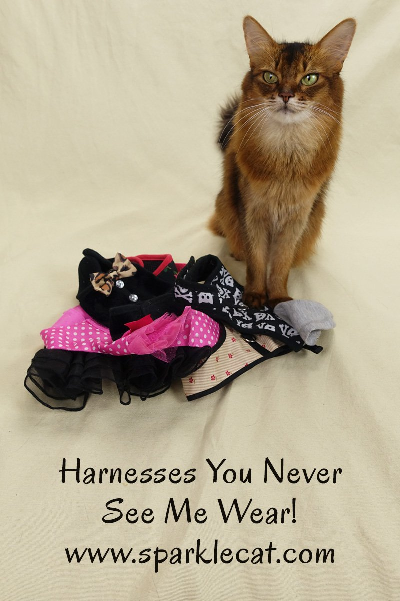 Cat Harnesses You Never See Me Wear