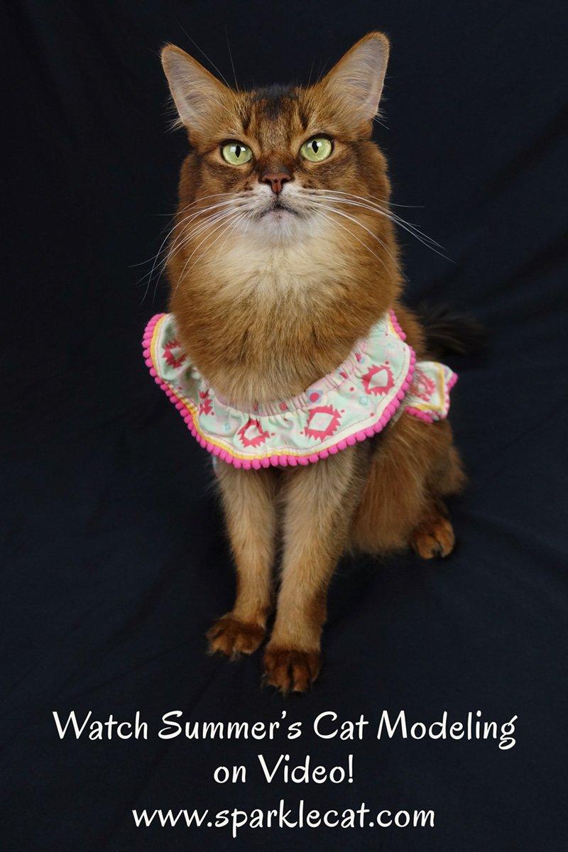 Cat Modeling – on Video!