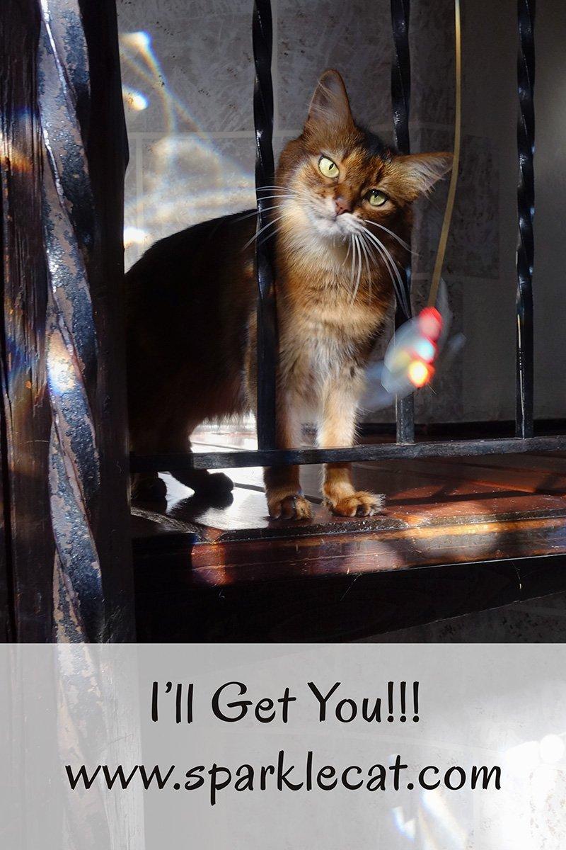 I\'ll Get You!