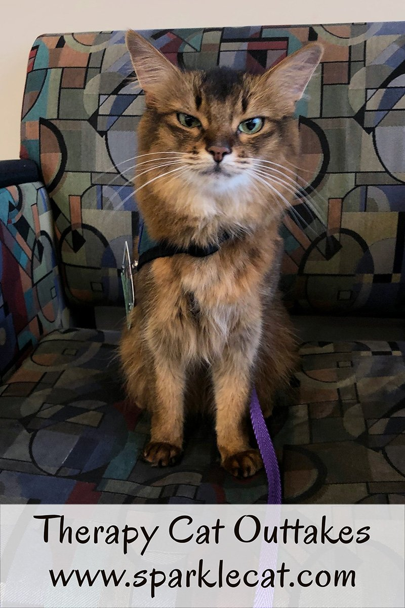 Summer shares some funny outtakes from her most recent therapy cat session.