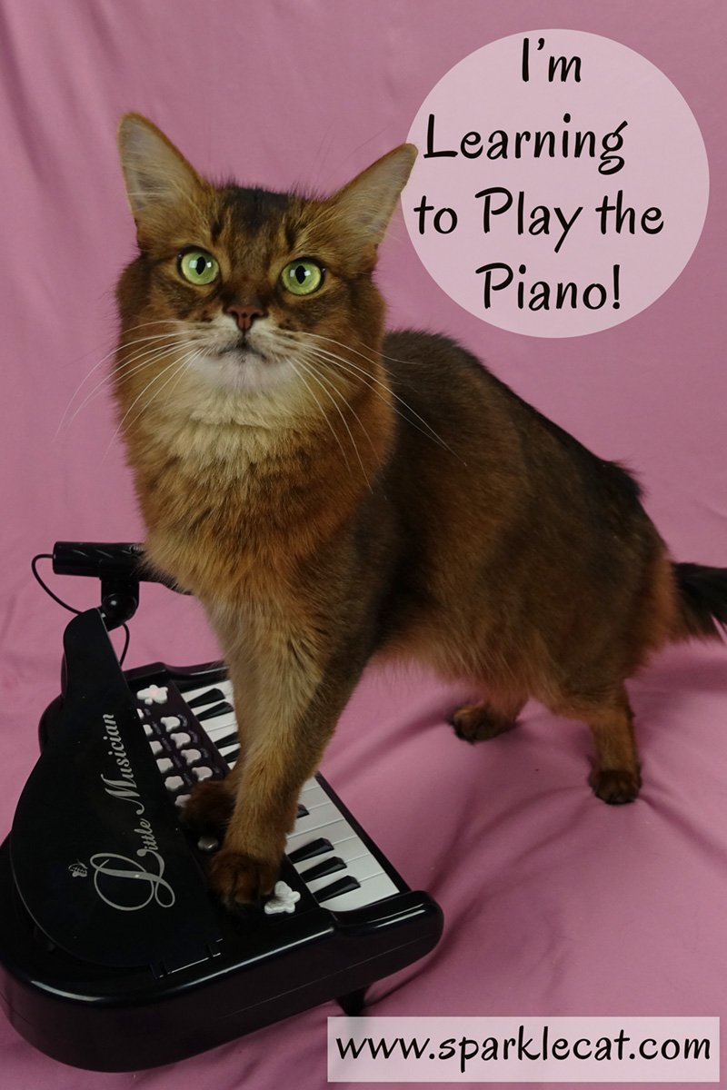 I\'m Learning to Play the Piano!