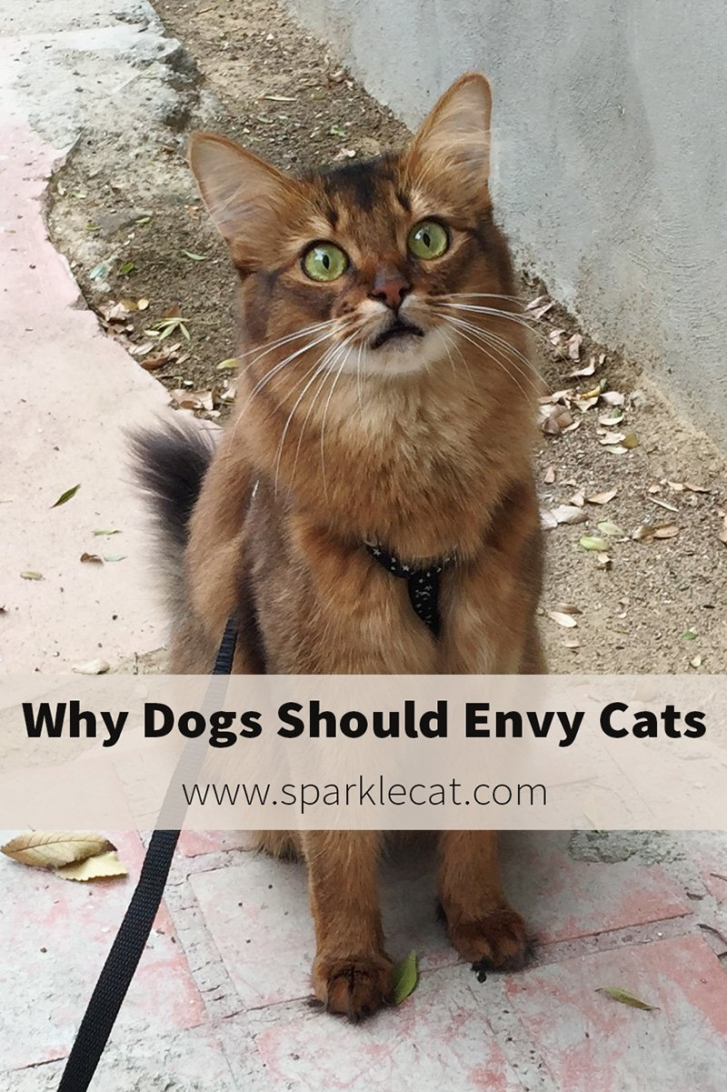 5 Reasons We Cats DON\'T Want to Be Like Dogs - and 5 Reasons Dogs Should Envy Cats!