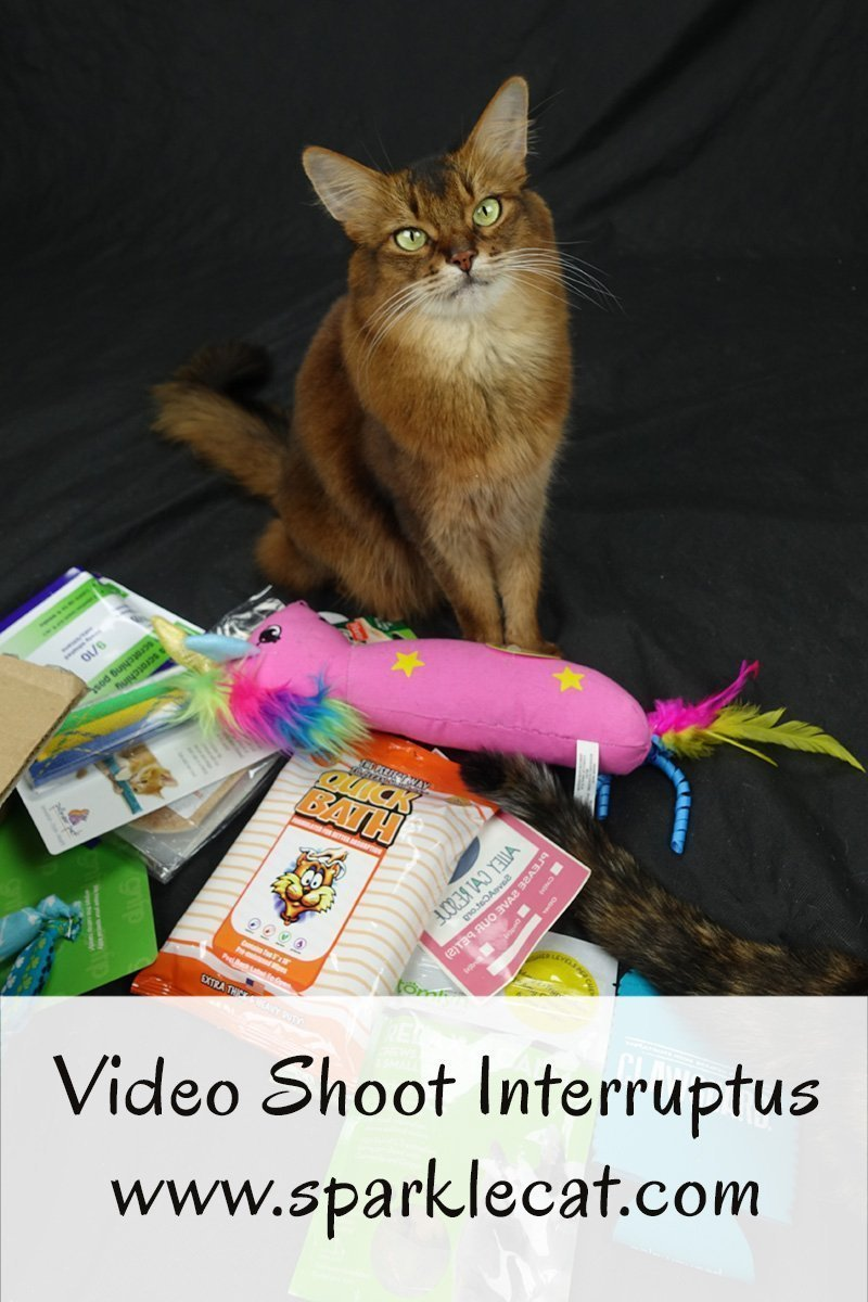 Summer tries to do a video shoot for Instagram TV, but it gets interrupted.