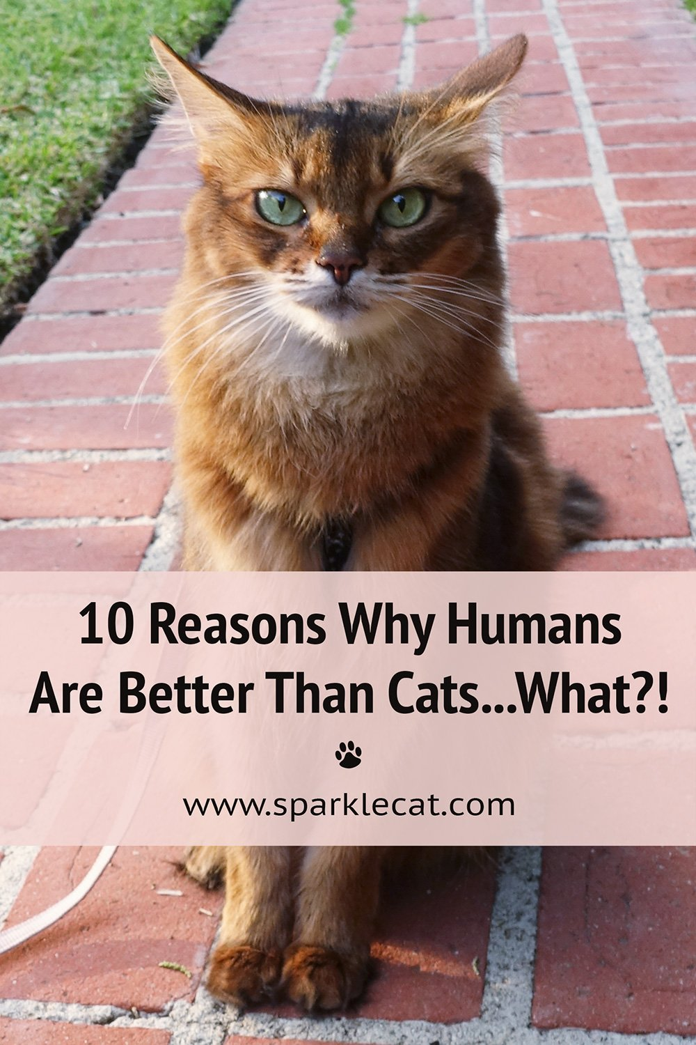 10 Reasons Why Humans Are Better Than Cats (Yes, Really!)