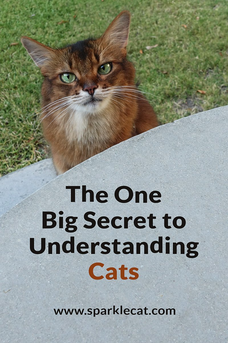 The One Big Secret to Understanding Cats