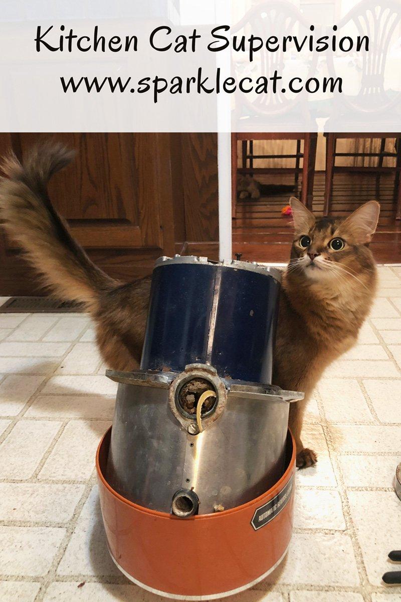 Kitchen Cat Supervisor