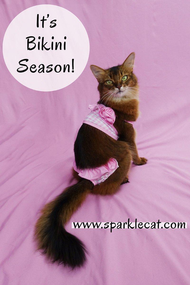 It\'s Bikini Season!