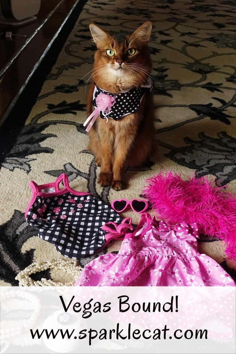 Summer gathers her wardrobe for a one-day cat show in Vegas.