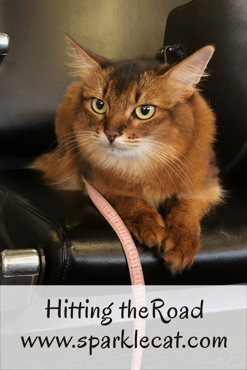 Summer and her human hit the road for Las Vegas.