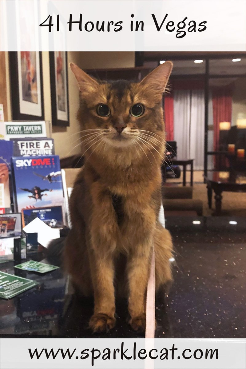 During her 41 hours in Vegas, Summer appears at a cat show.