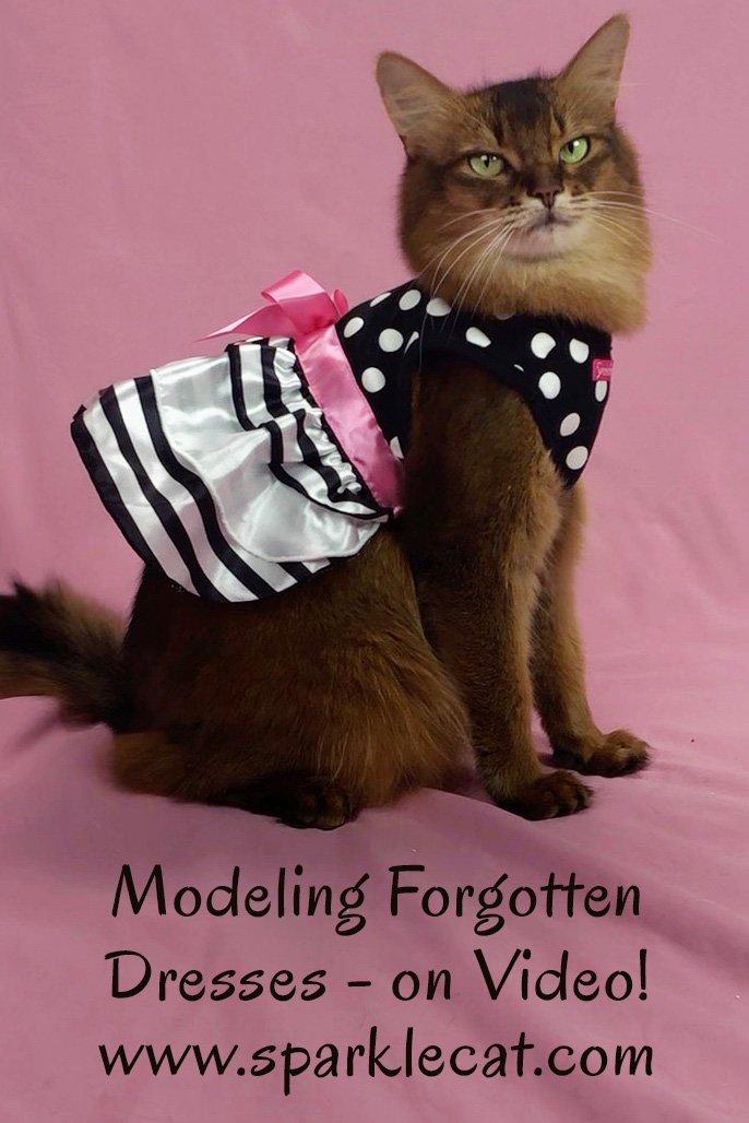 Forgotten Cat Dress Modeling - on Video!