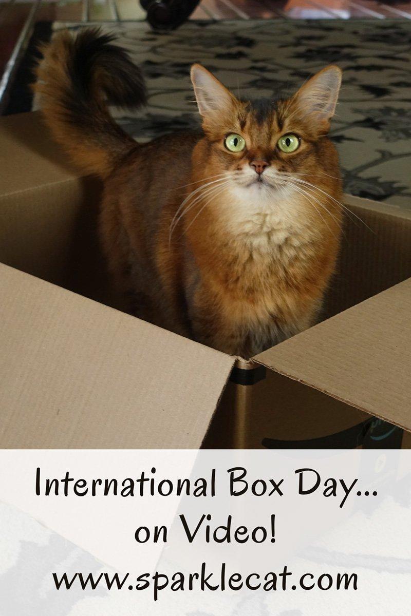 It\'s International Box Day... on Video!