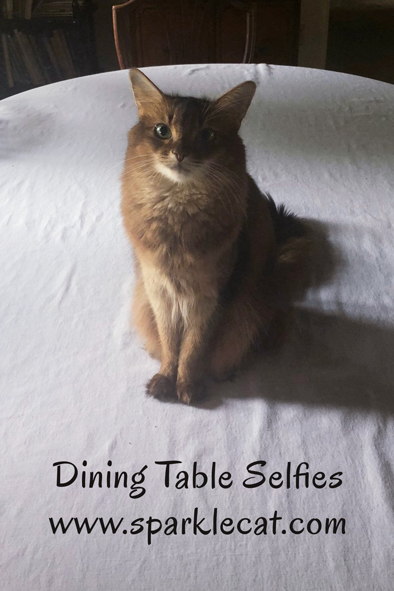 Summer pauses before supervising set up for Cat World Domination Day to take her selfie on the dining table.