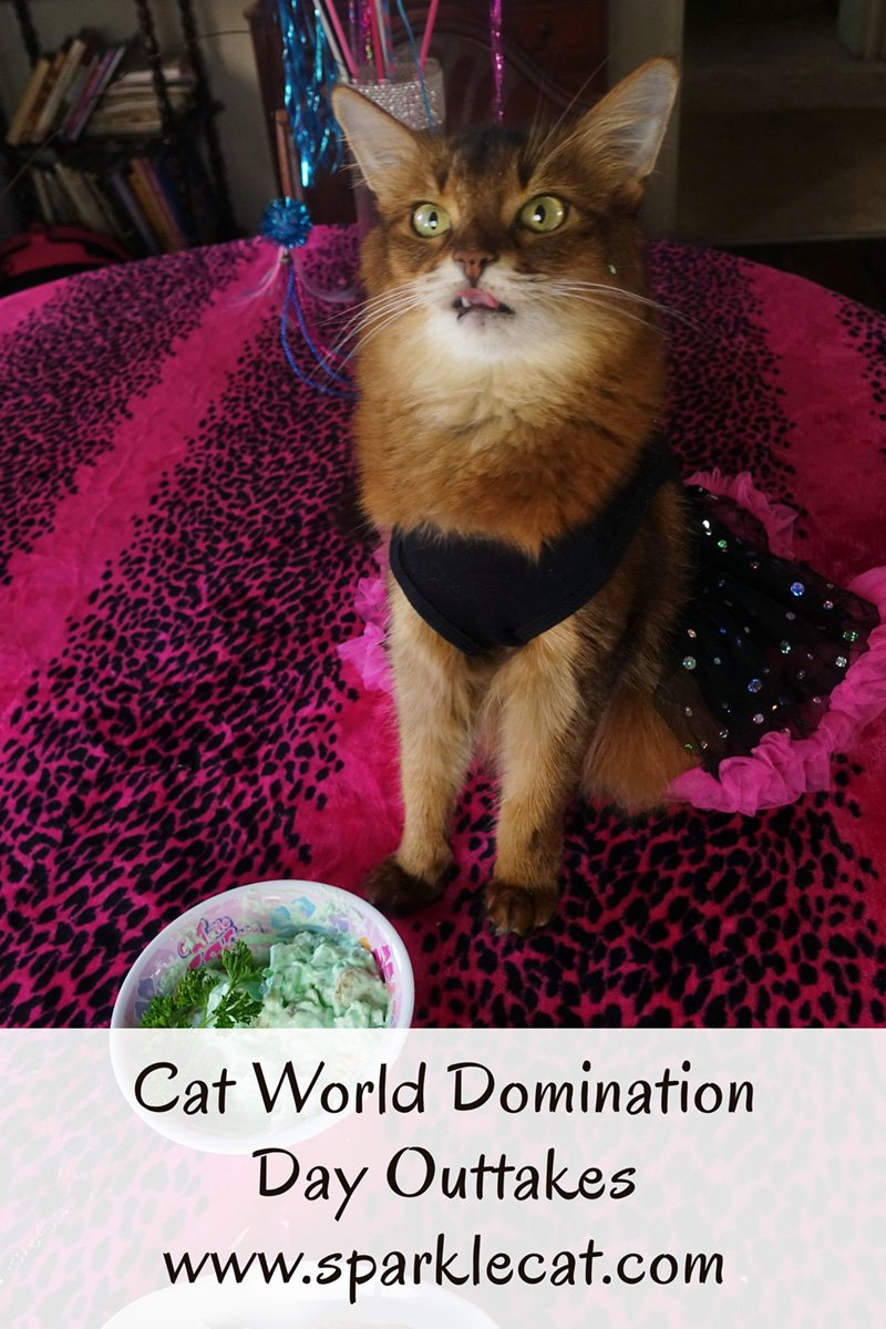 Cat World Domination Day Outtakes