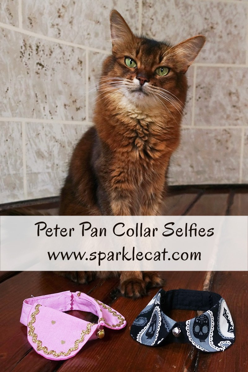 Summer models a couple of Peter Pan collars that her human got her at CatCon.
