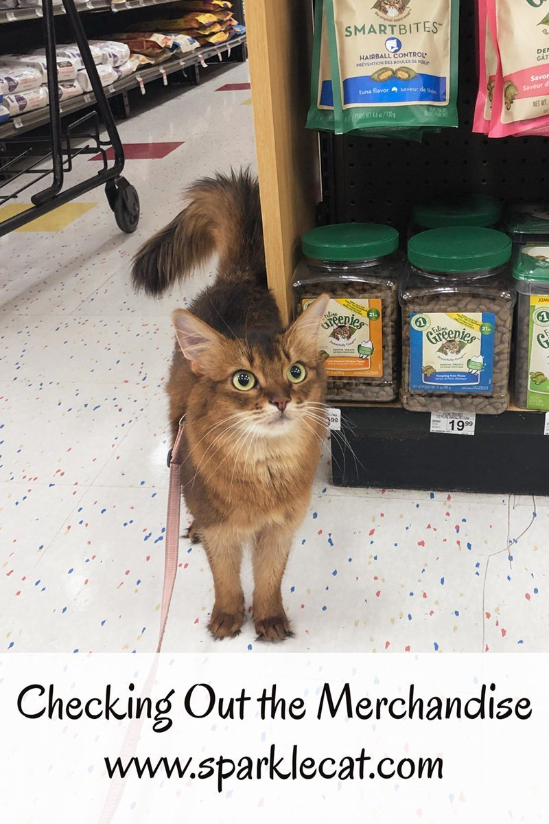 Summer goes to the pet store and checks out the merchandise.