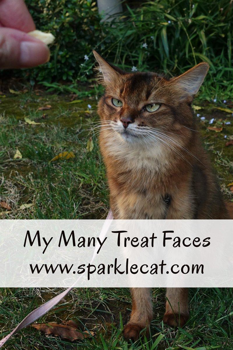 My Many Treat Faces