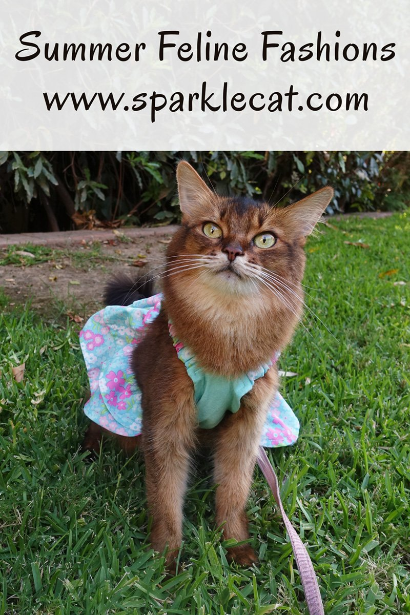 Feline Fashion Friday - Cat Dresses From Past Summers