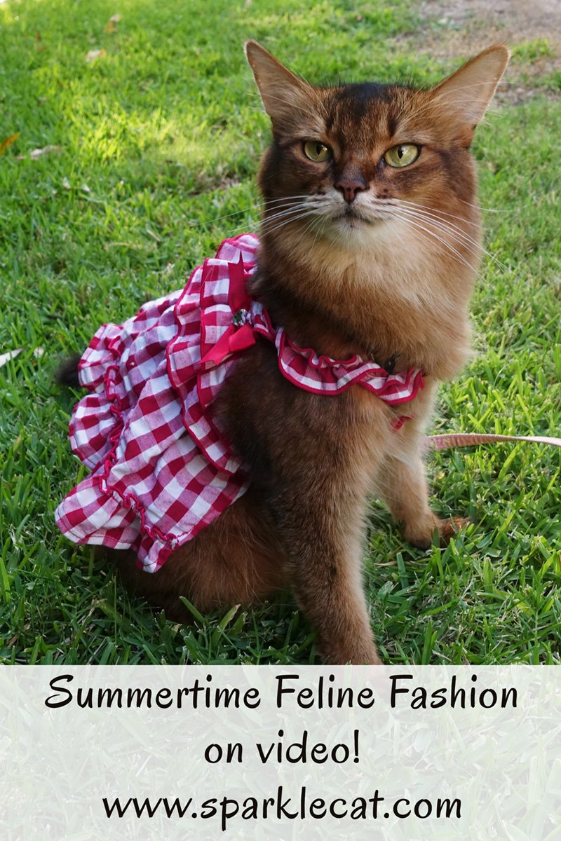 Summertime Cat Fashion - on Video!