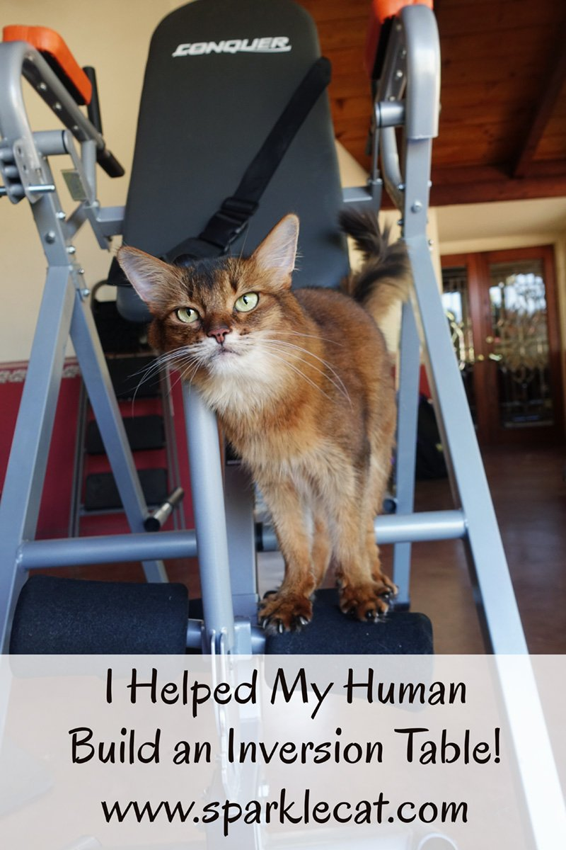 I Helped My Human Assemble an Inversion Table!