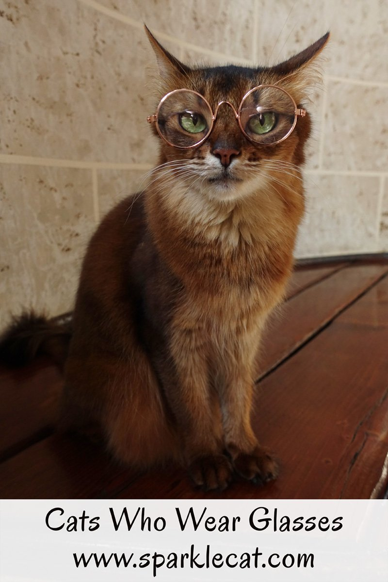 Summer\'s human finds cat glasses online and Summer tries them on.