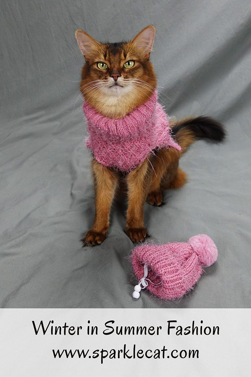 It\'s winter in summer fashion time with Summer... the cat.
