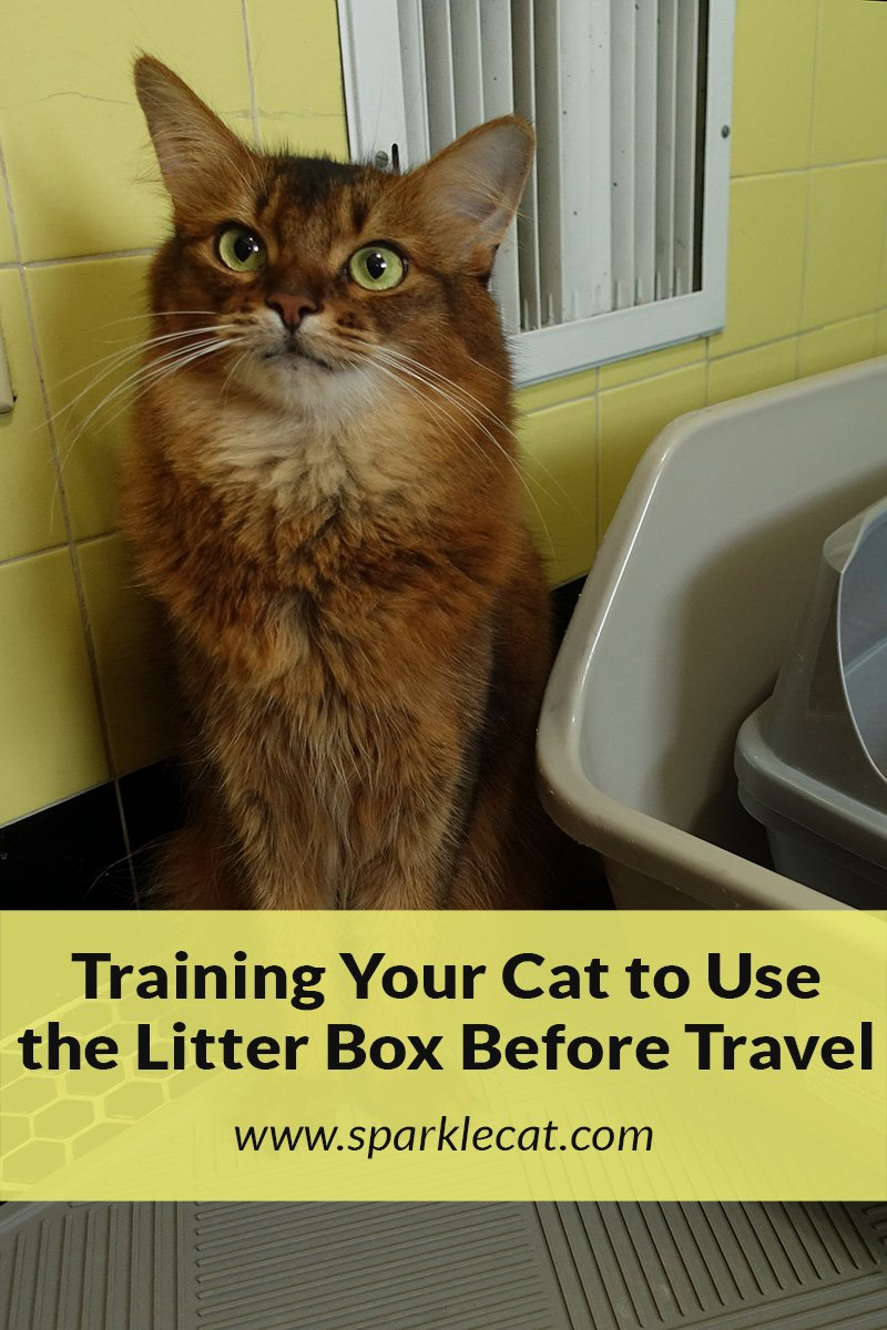 Going Before You Go, or Using the Litter Box Before Traveling