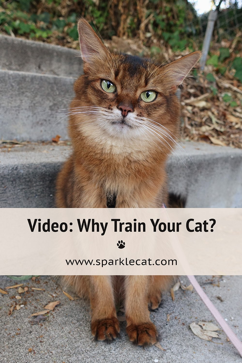 Why Train Your Cat - a Video