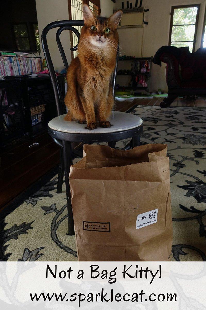 Not a Bag Kitty!