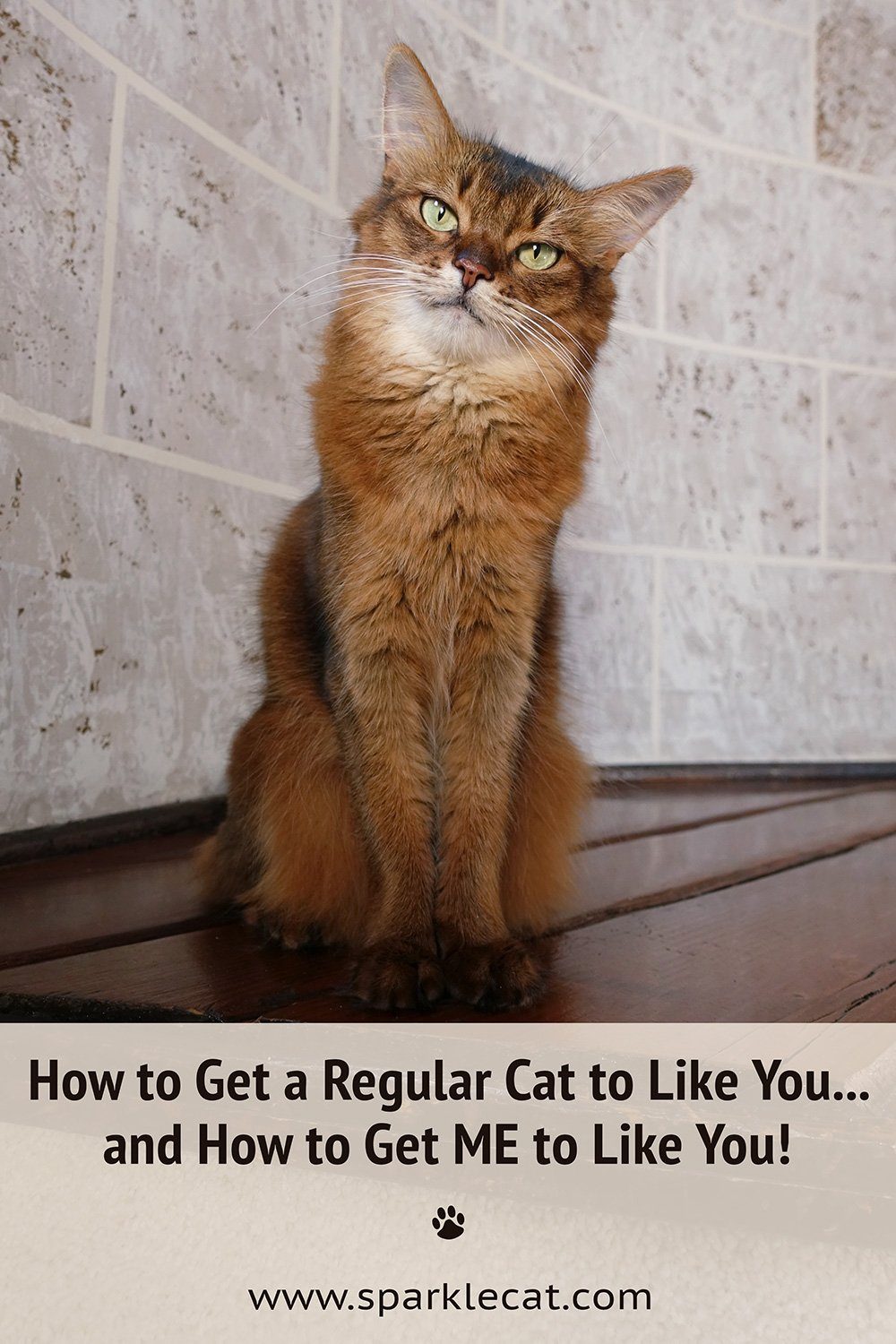 How to Make Me Like You... And How to Make a Regular Cat Like You