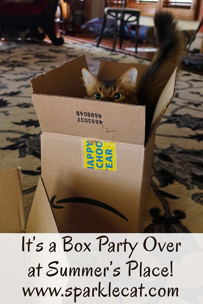 It\'s box party time at Summer\'s and a good time is guaranteed!