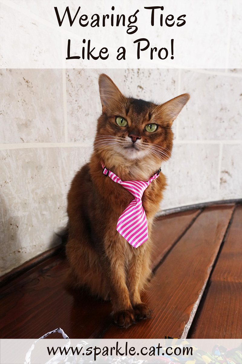 Wearing Ties Like a Pro (If You Are a Kitty)