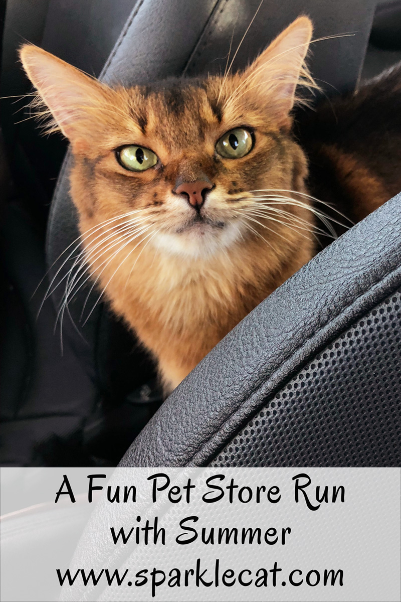 It\'s Fall at the Pet Store