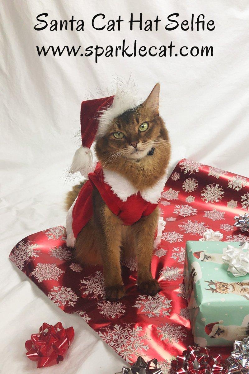 Santa Cat Hat Selfie