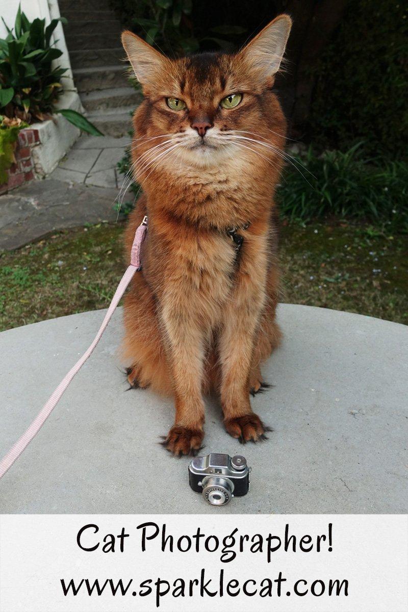 Cat Photographer!