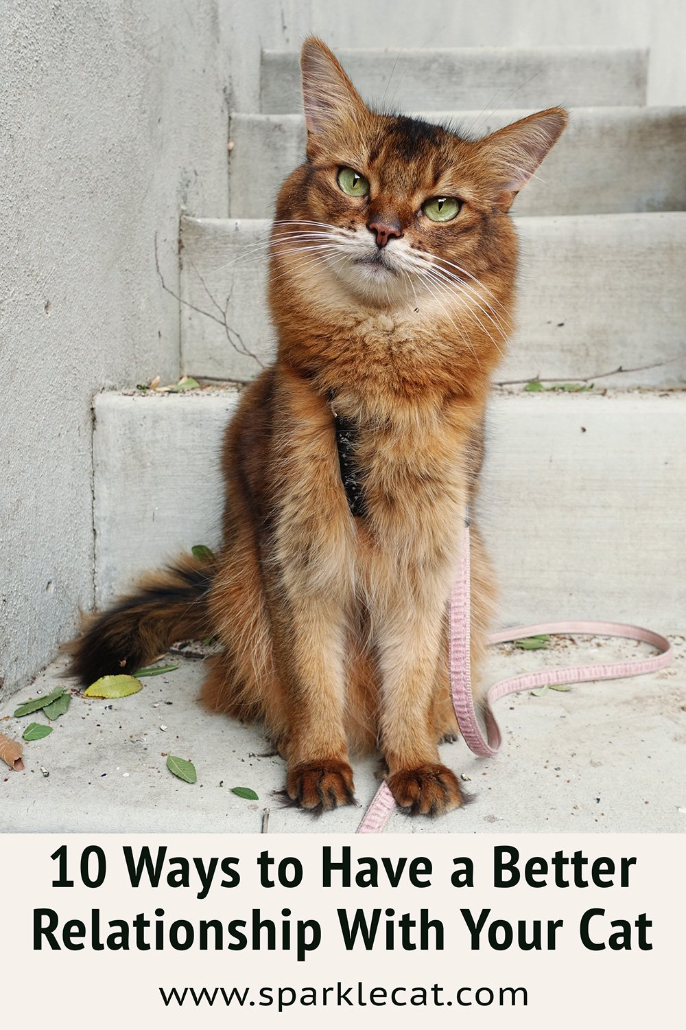The Top 10 Ways to Have a Better Relationship With Your Cat