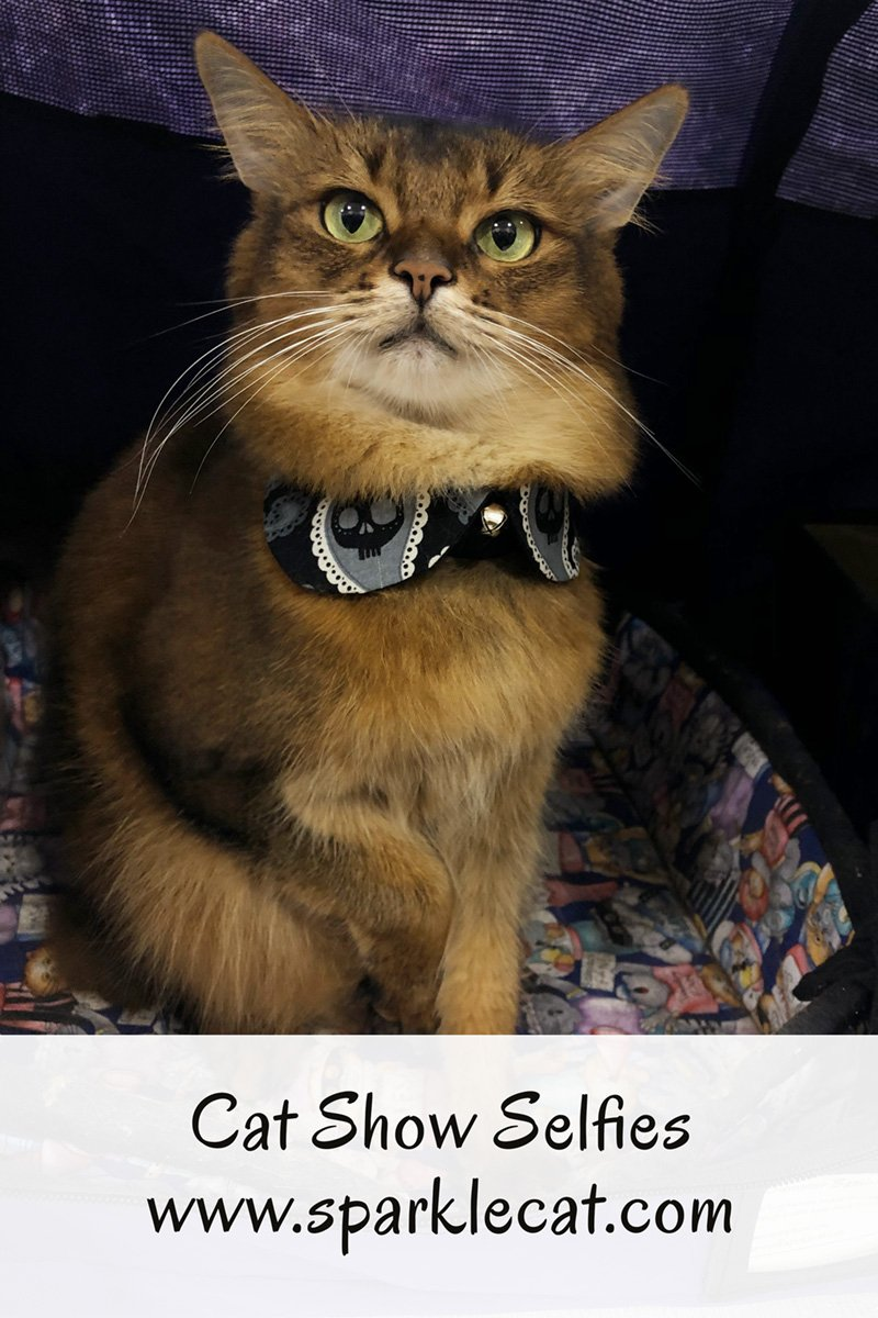 Summer takes a few quick selfies at the cat show she\'s attending in Ontario, CA.