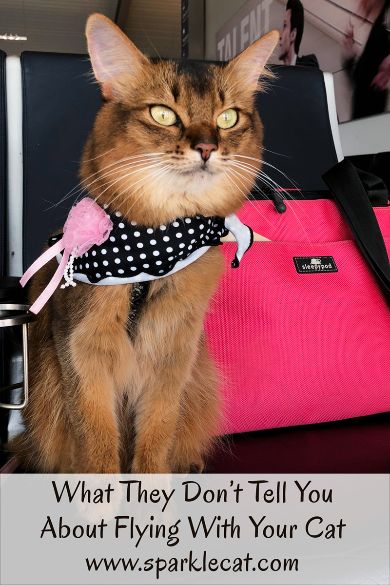 Here are five things nobody tells you about flying with your cat.