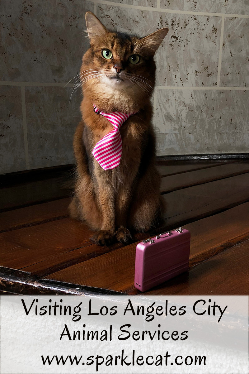 Summer visits Los Angeles City Animal Services, and helps spread the word about a grant from the ASPCA to promote more cat adoptions.