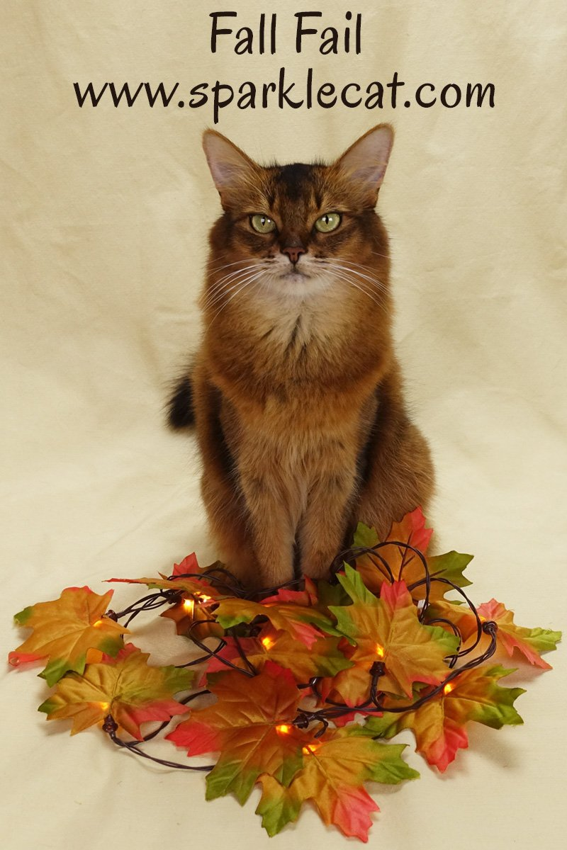 Summer\'s human tries to put together a fall photo shoot... and fails.