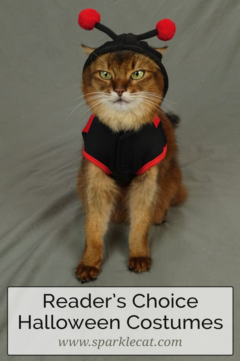 Trying On My Reader\'s Choice Halloween Costumes