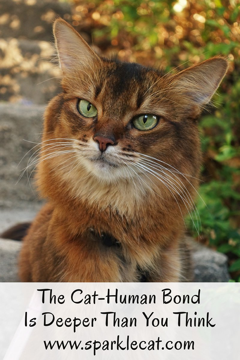A research study shows that the cat-human bond is deeper than you may think.