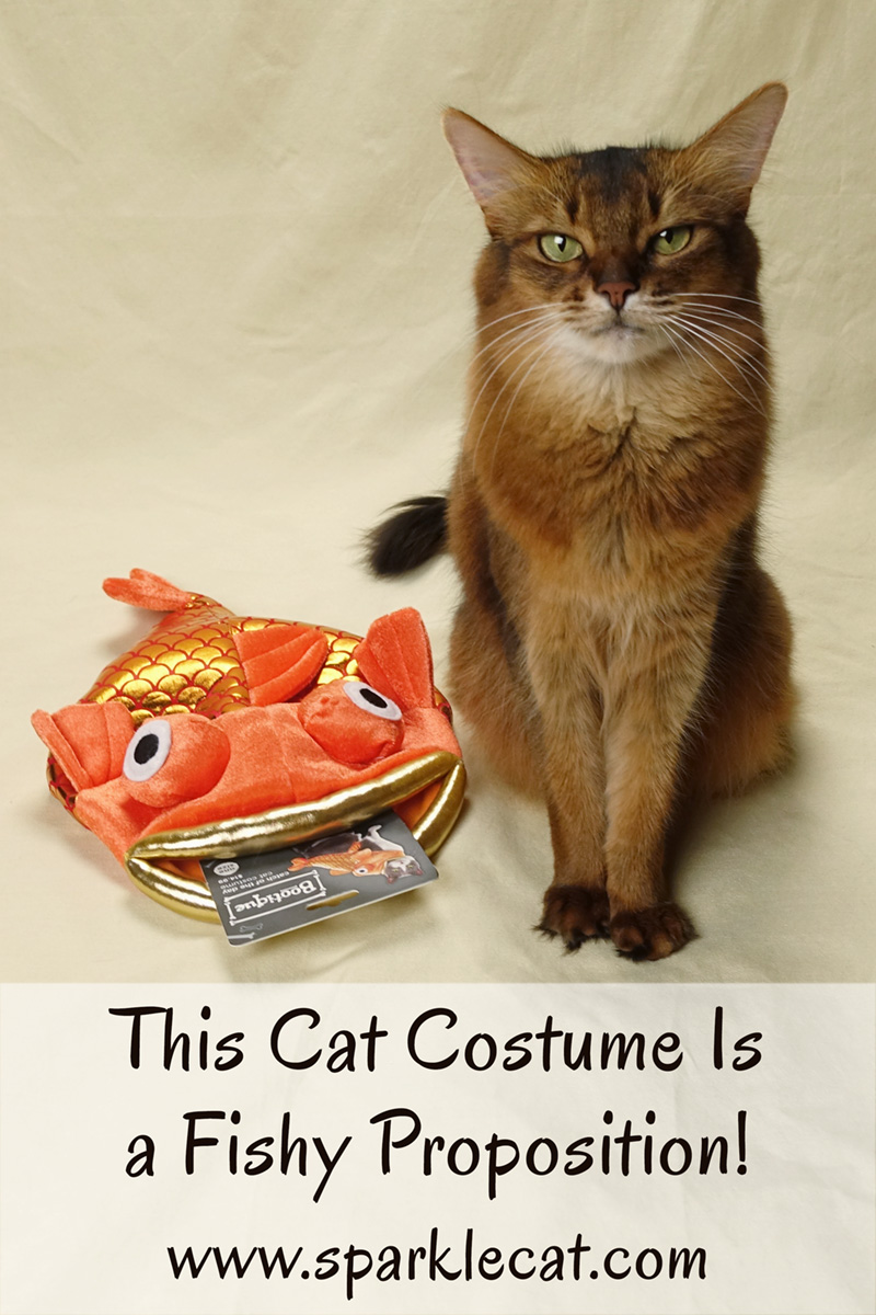 Who wore this fish costume better? Summer or the cat on the packaging? The answer should be obvious.