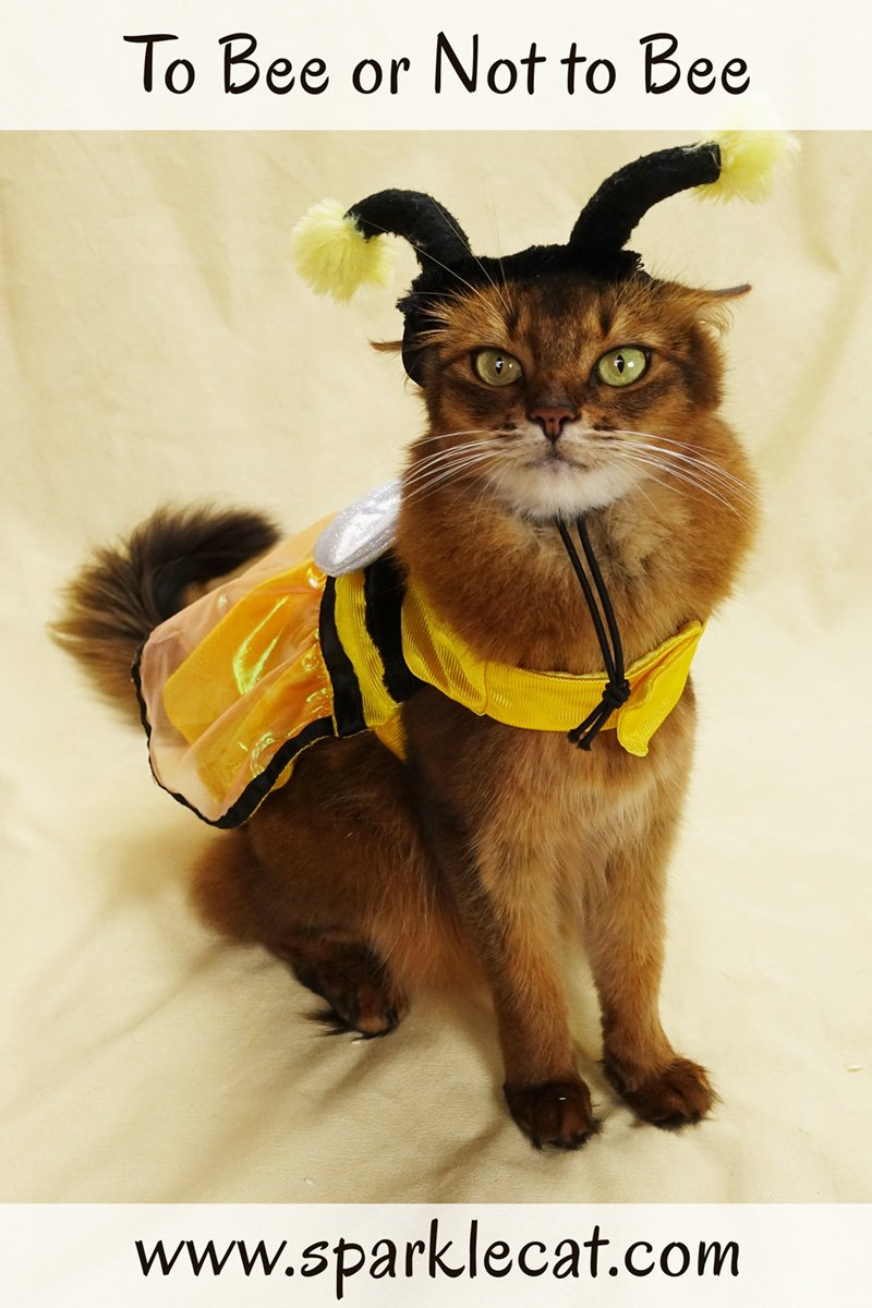 For Halloween, Summer decides that dressing up as a bee is not to bee.