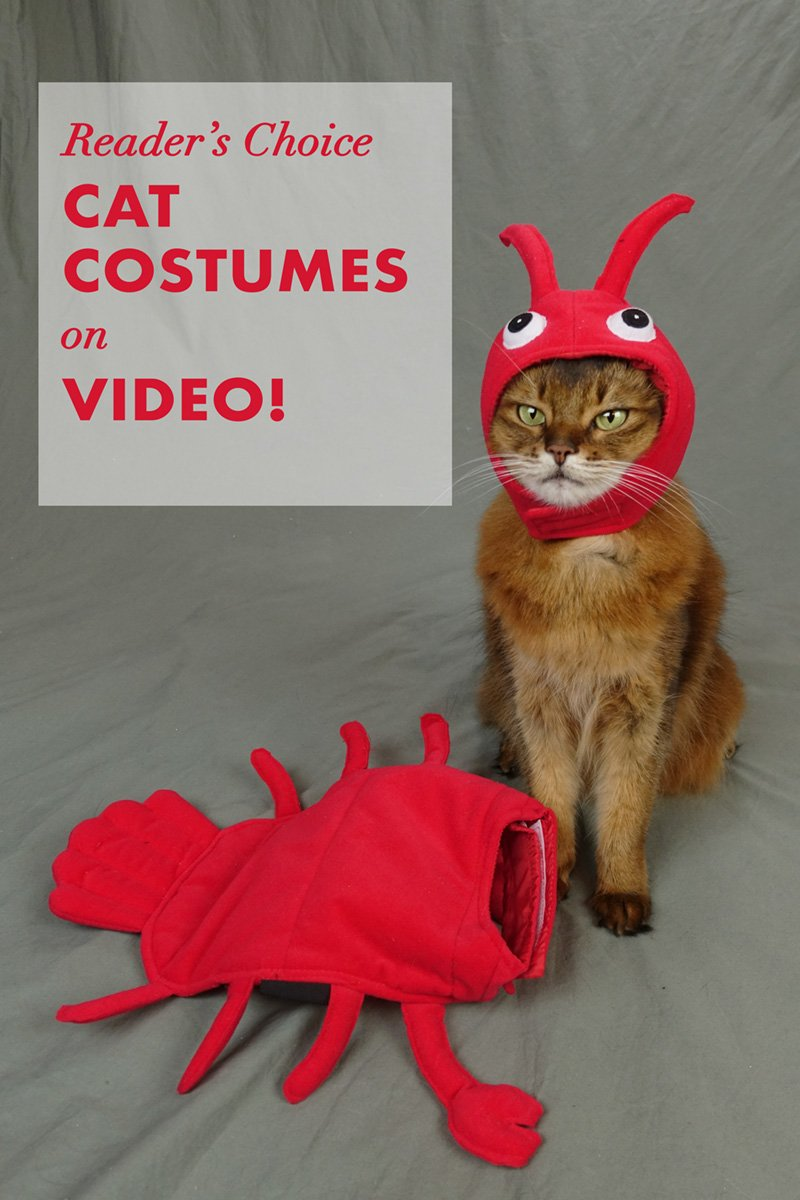 My Reader\'s Choice Costumes - on Video
